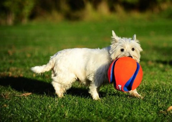 Chuckit Kick Fetch Hundeball